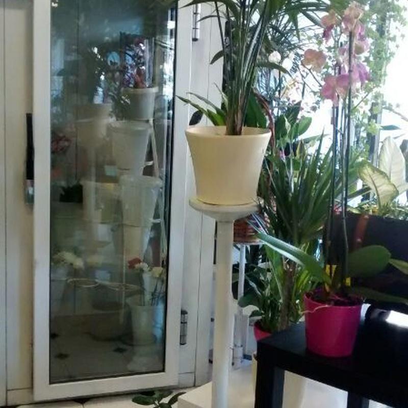 Accesorios y complementos florales