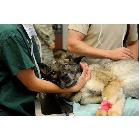 Cirugía general: Servicios de Clínica Veterinaria Servet