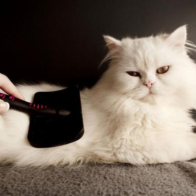 ¿Cuándo cortar el pelo a los gatos?