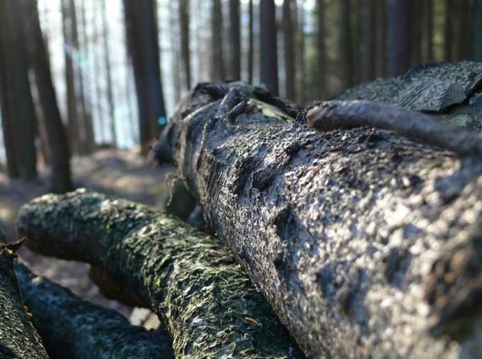 Talas: Productos y servicios de Forestal Arauzo