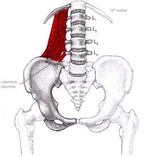 Dolor lumbar y el músculo cuadrado lumbar