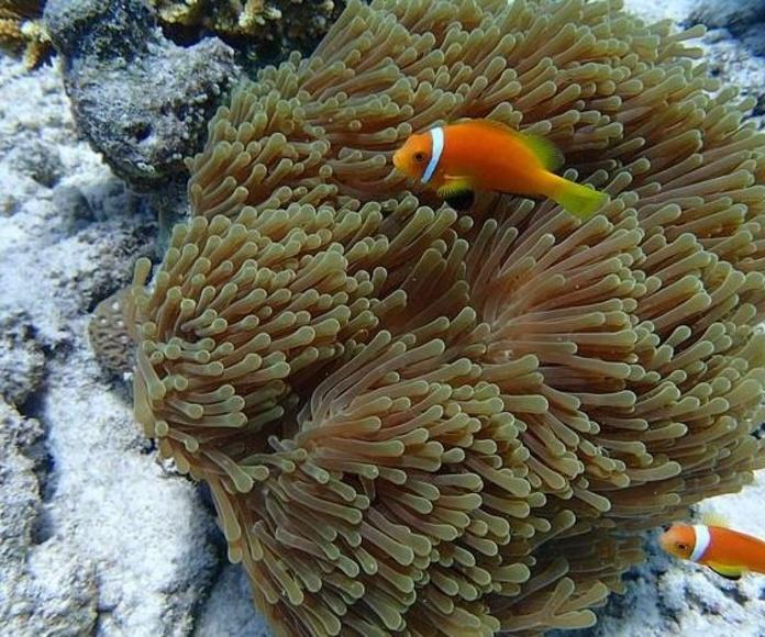 Peces tropicales y marinos: Productos y servicios de Zoolandia
