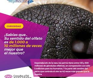 El sentido del olfato de los perros es de 1.000 a 10 millones de veces mejor que el nuestro