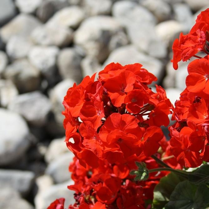 Las plantas perfectas para tu jardín