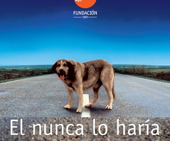 NO HUESOS!!!!:  de Clínica Veterinaria Rocafort
