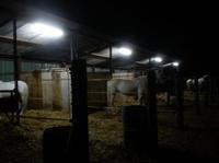 PUPILAJES: Servicios de Hípica Can Buimira