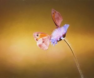 Metamorfosis, transformándote con coraje y conciencia
