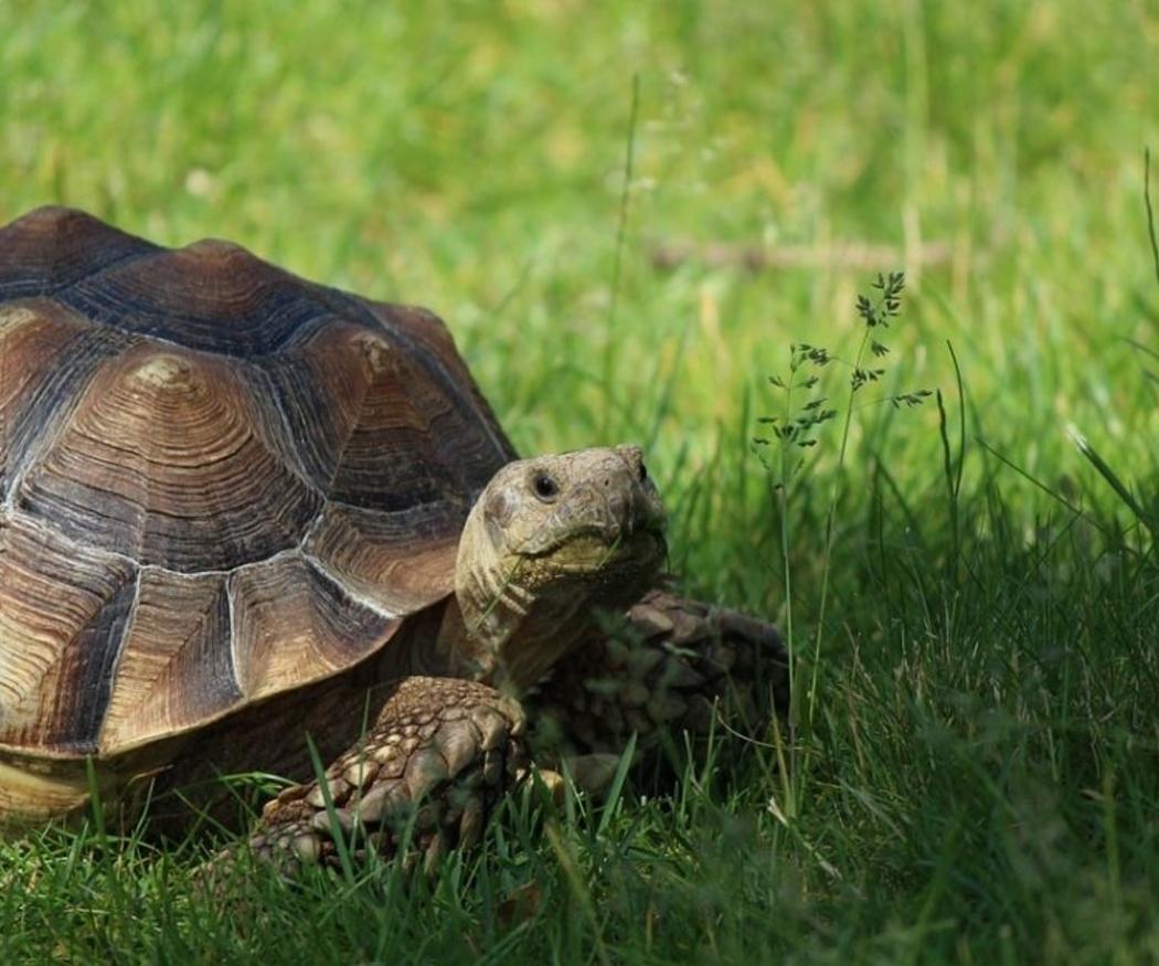 La alimentación de las tortugas terrestres