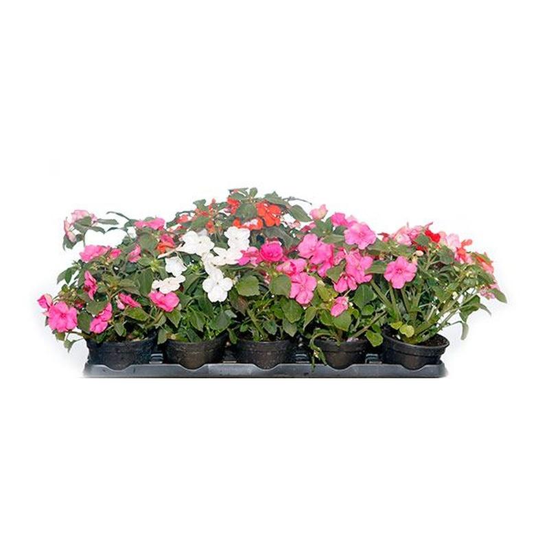 Plantas de exterior y jardín: Productos de FLORISTERÍA CASA BASUSTA