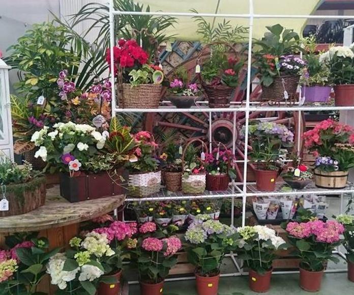 Plantas de exterior: NUESTROS PRODUCTOS de Mofusa