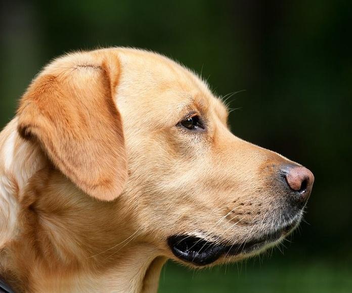 Terapia canina: Servicios de Cemaf