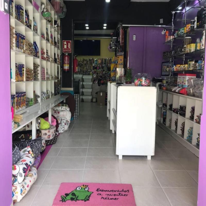 Accesorios: Servicios de Mascotas Dreams