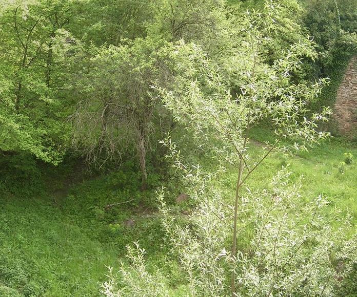 Estudio de Inundabilidad de la Riera de les Llosses para la rehabilitación de un molino en DPH. TM Les Llosses (Girona). EIN119-2011.