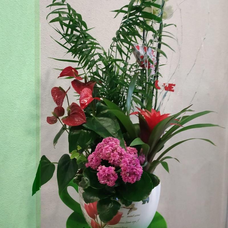 Arreglos de plantas: Productos y servicios   de Floristas San Isidro José