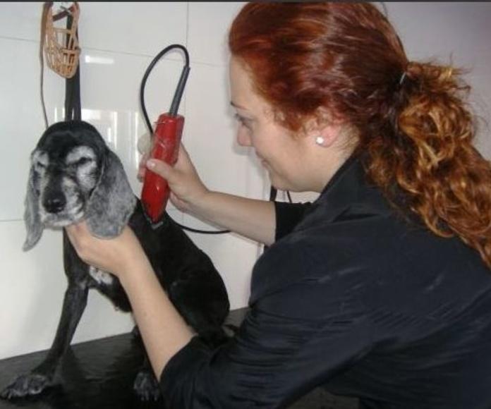 peluquería canina en Almazora - Castellón