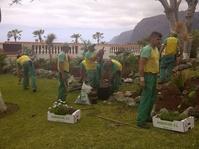 Diseño de jardines en Tenerife personalizados