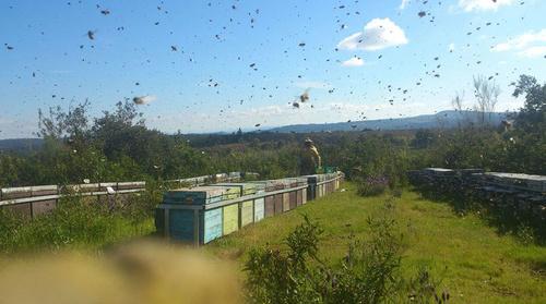 Producción de miel
