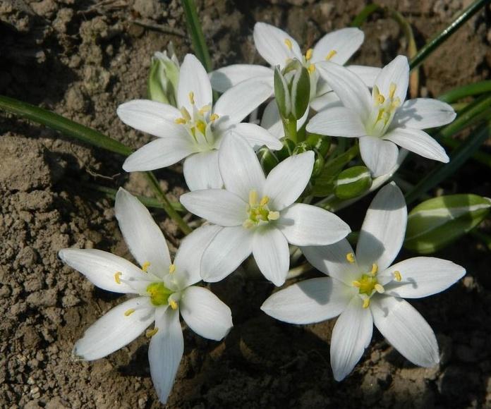 Estrella de Belén: Terapias de Terapias Alternativas Isabel