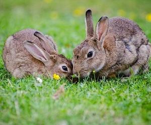Importancia de un veterinario para los conejos