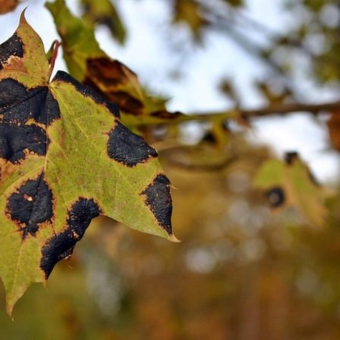 Cómo identificar posibles enfermedades y plagas en nuestro jardín