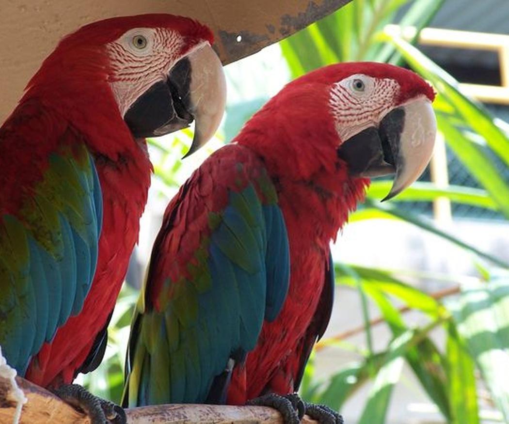 ¿Sabes qué son los animales exóticos?