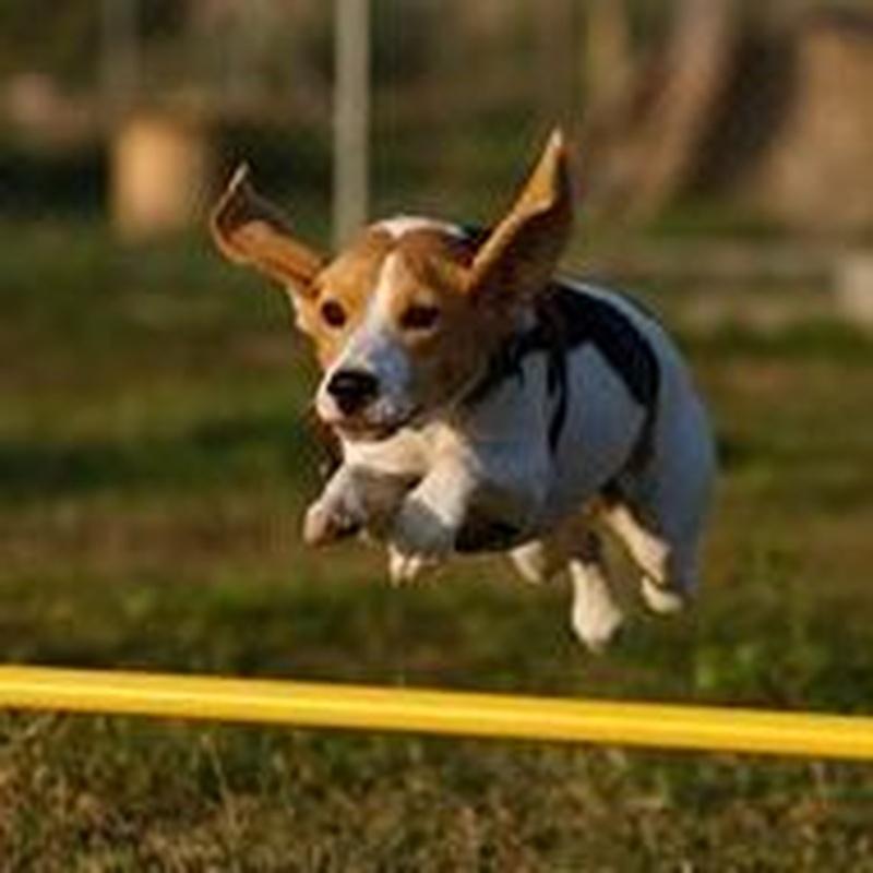 Cursos de socialización, adiestramiento y agility: Servicios de Hotel Canino y Felino El Rey de la Casa