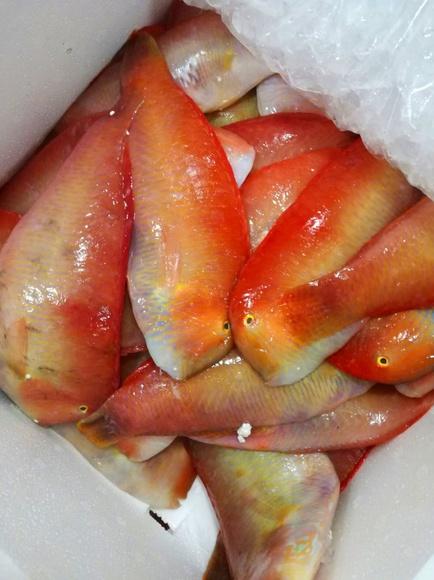 Lorito: SERVICIOS de Pescastur