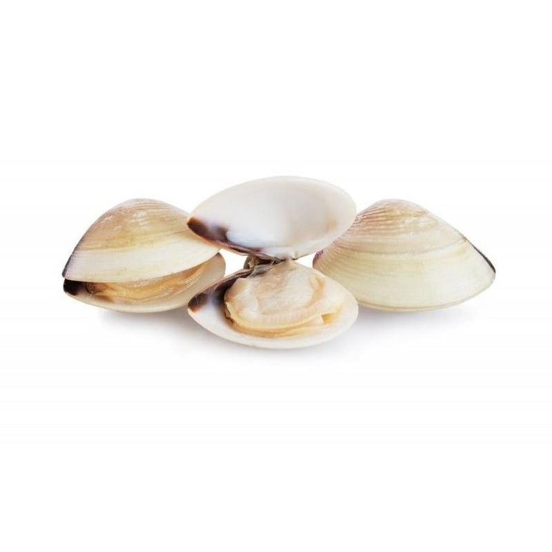 Almeja Blanca: Catálogo de Productos ISK de Isomarket Iberian SL