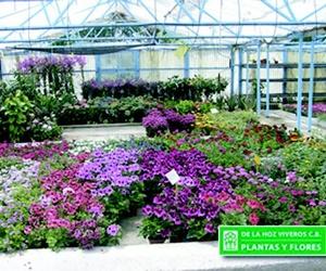 Flores para para tu jardín