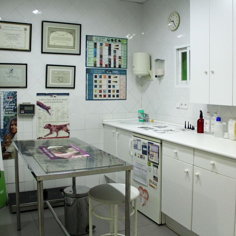Cirugia: Productos y Servicios de Clínica Veterinaria Centro