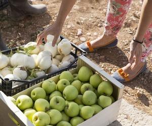Comprar fruta ecológica en Zaragoza