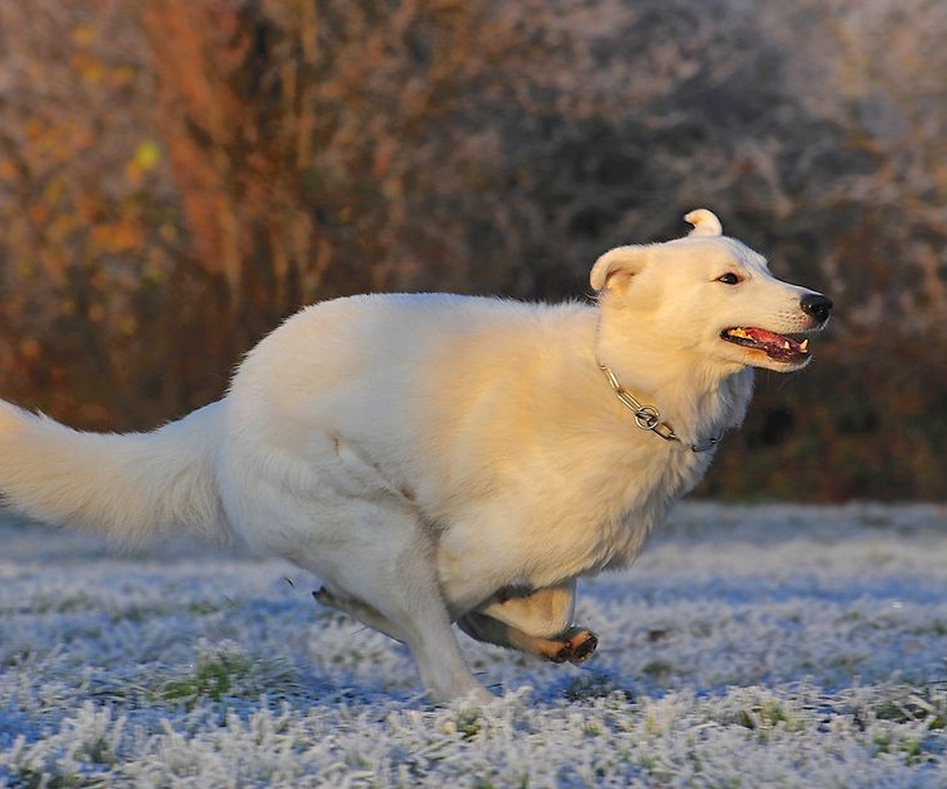 La obesidad en los perros