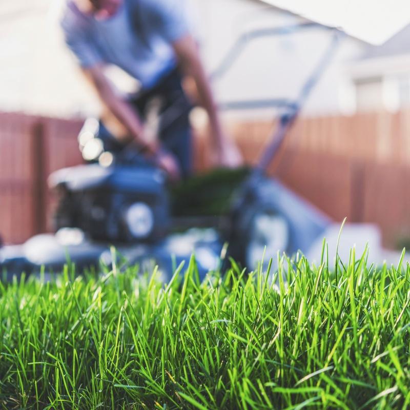 Mantenimiento de jardines: Servicios de Grupo Cánovas Jardinería