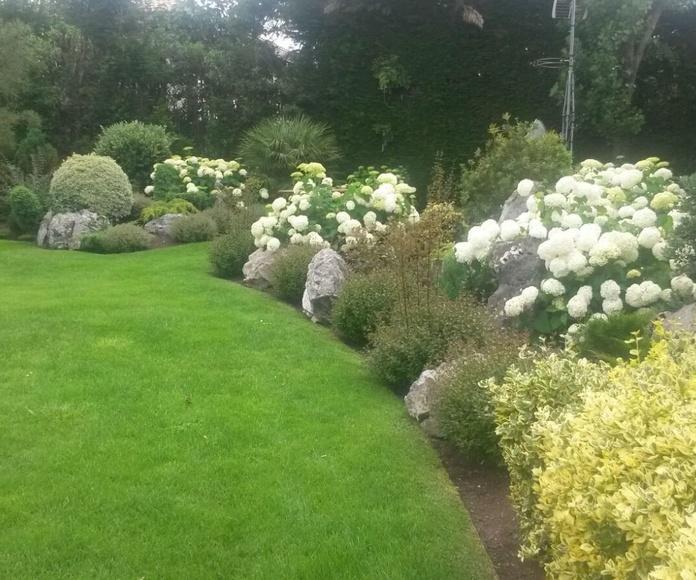 Vivaces: Servicios de Jardinería IGLE-MAN