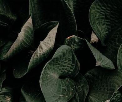 Las plantas son inteligentes: no tienen cerebro, pero pueden recordar y escuchar