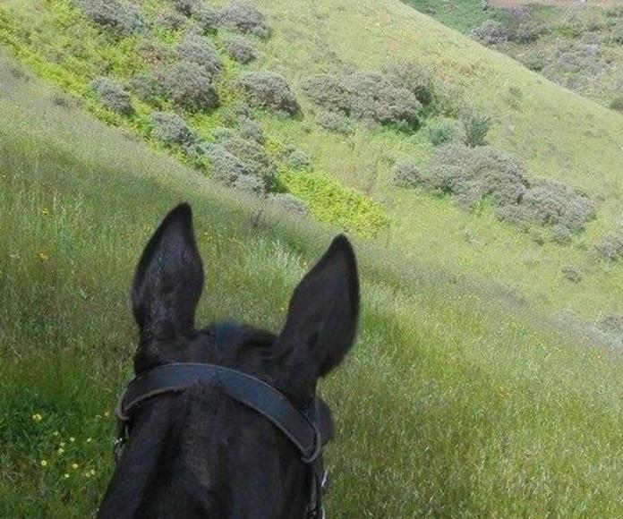 Excursiones: Servicios de Centro Hípico San Mateo