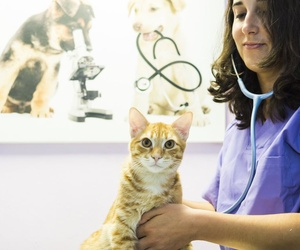 Dermatólogos veterinarios en Santa Cruz de Tenerife