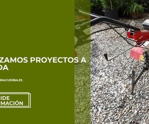 Poda de árboles y palmeras en Reus | Jardinería Cuerba Domenech, S.L.