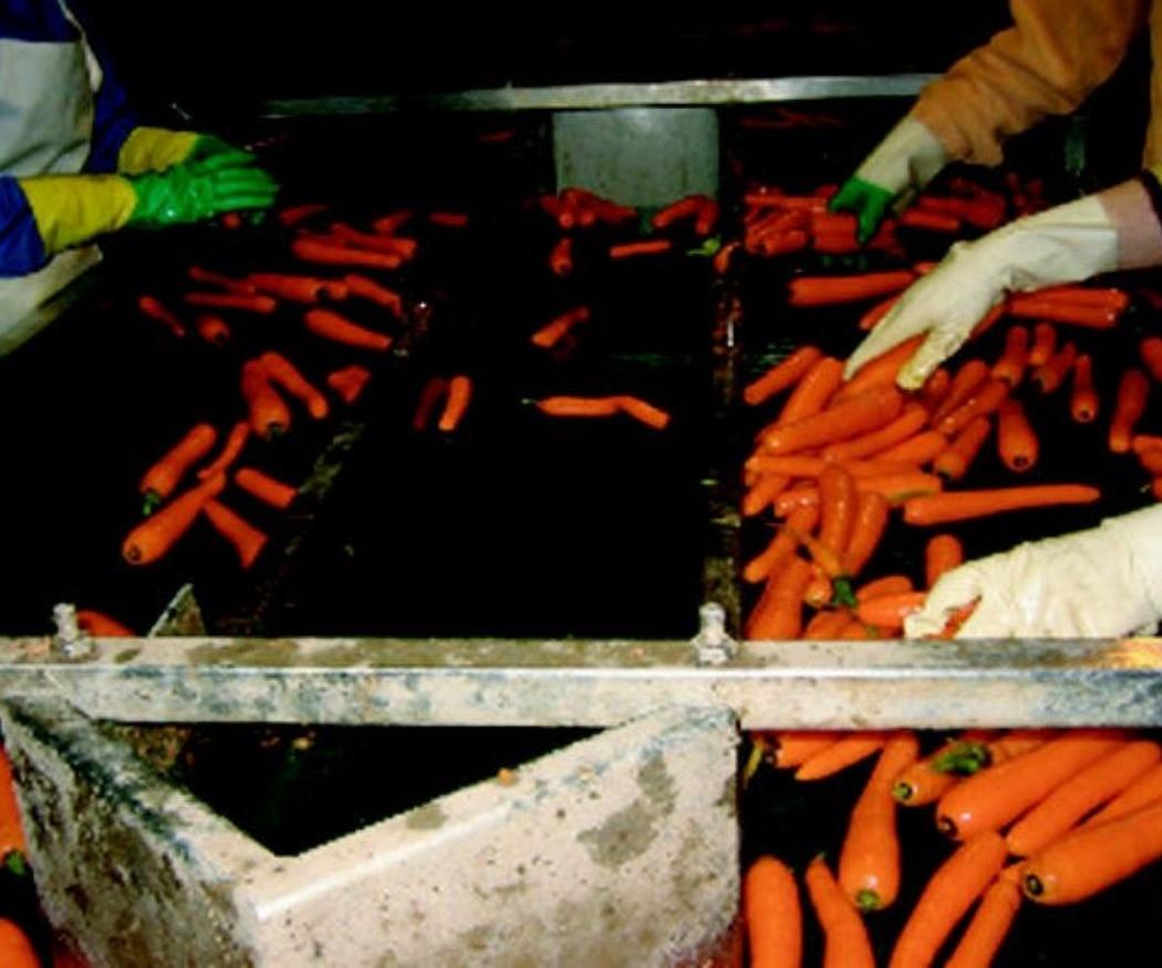 Cómo hacer tus propias zanahorias encurtidas