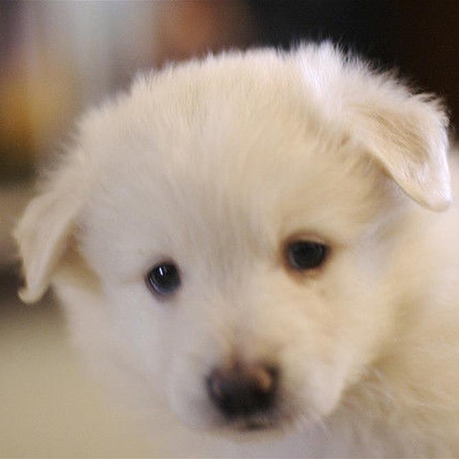 Consejos para el cuidado del pelaje de tu perro