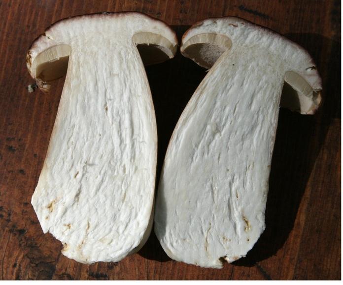 Boletus edulis: Productos de Mundifruit