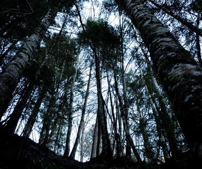 Entorno natural protegido