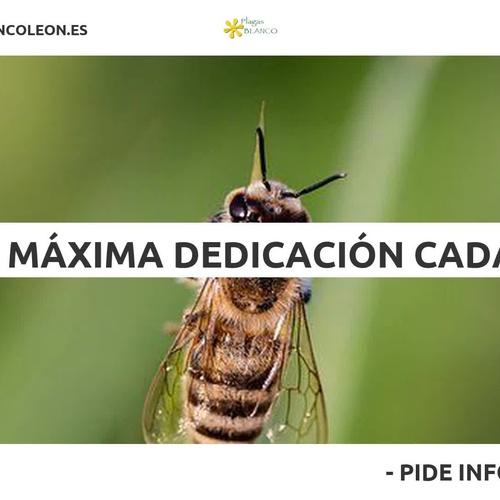 Carcomas y termitas en Zamora | Plagas Blanco León
