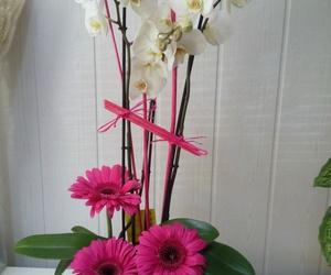 Phalaenopsis cristal con gerberas