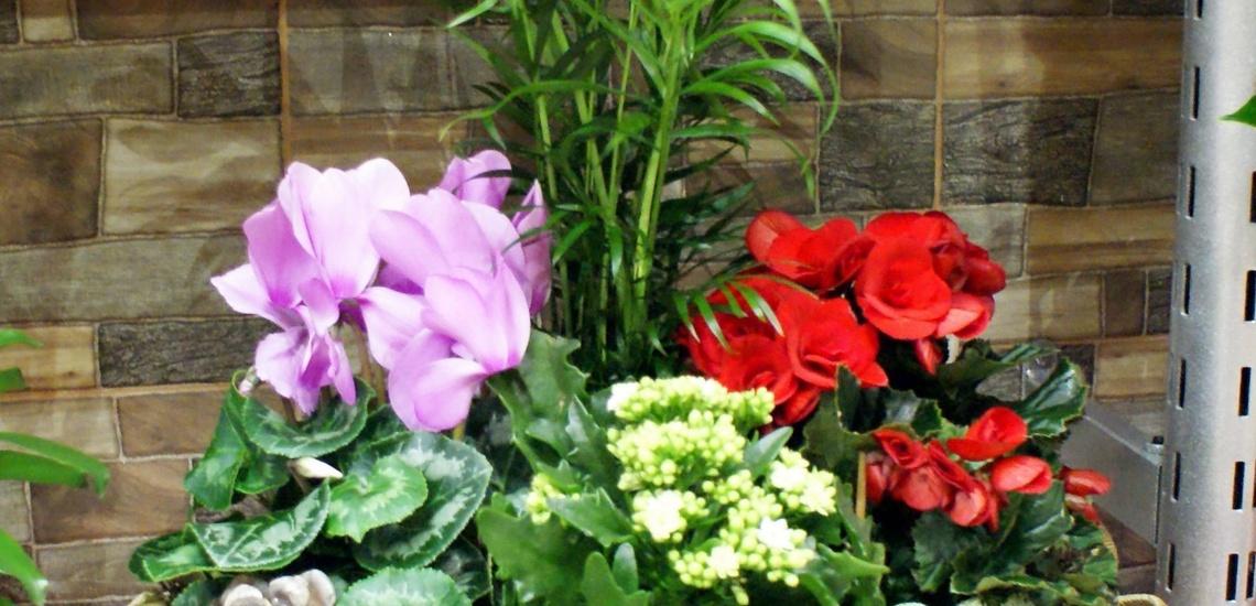 Flores a domicilio en Vallecas - Floristería Contreras