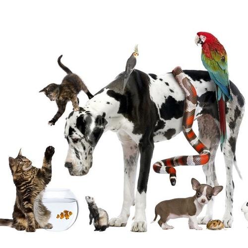 Consultas generales veterinarias en Talavera de la Reina
