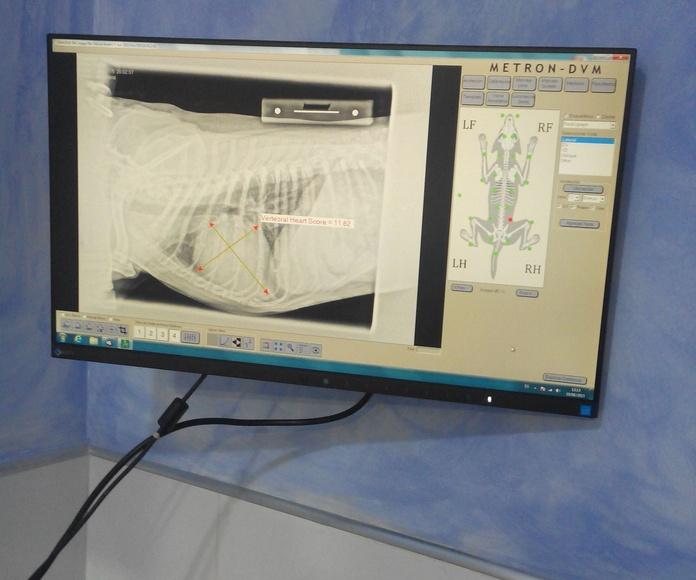 Digitalizamos nuestro aparato de Rx. Nos permite un mejor diagnóstico por medio del tratamiento de las imágenes de las radiografías. Al mismo tiempo es más ecológico.