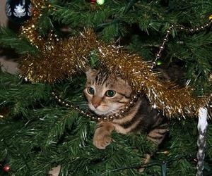 Los peligros de la Navidad