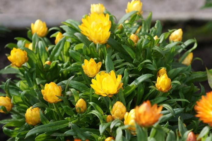 Mantenimiento y construcción de jardines: Productos de El Vivero de Maruja