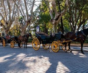 Coches de caballos en Sevilla